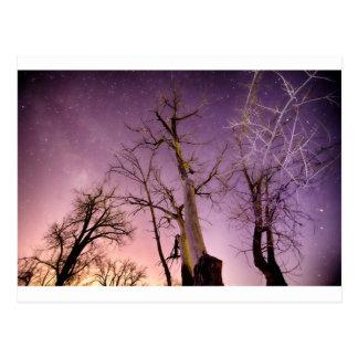 Night to Day Postcard
