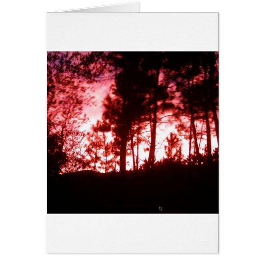Night Trees Card