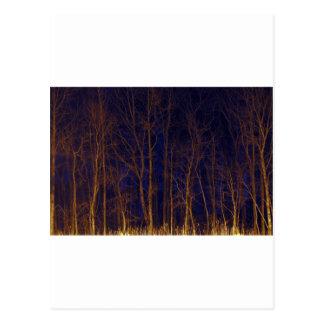 Night Trees Postcard