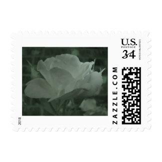 night-vision rose stamps
