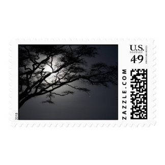 nightacacia stamp
