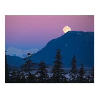 Nightfall in Alaska Postcard