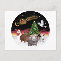 NightFlight - 3 Guinea Pigs Postcard