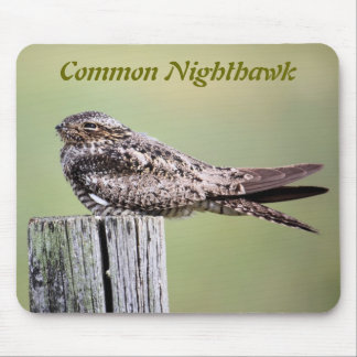 Nighthawk común tapete de ratones