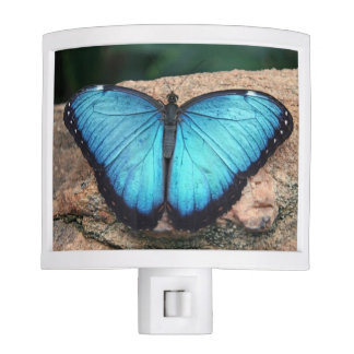Nightlight azul de la mariposa de Morpho Luces De Noche
