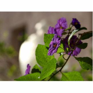 Nightshade Flowers Photo Cutout