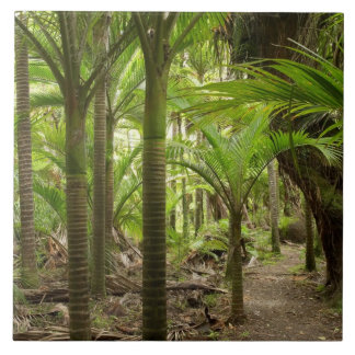 Nikau Palms, Heaphy Track, near Karamea, Ceramic Tile