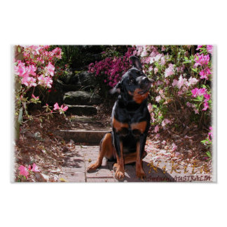 Nikita the Rottweiler with flowers Poster