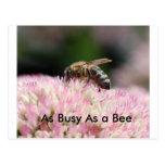 Nikon11 009, tan ocupado como una abeja postal