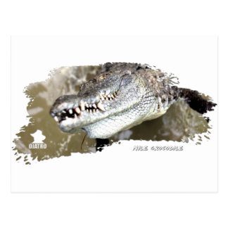 Nile Crocodile 01 Postcard
