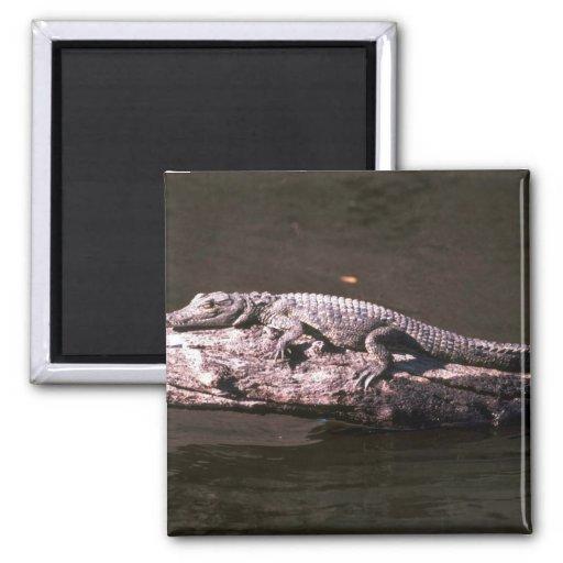 Nile Crocodile Fridge Magnet