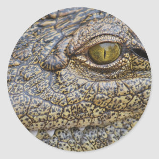 Nile crocodile from Africa Classic Round Sticker
