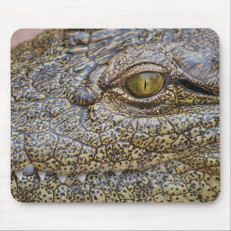 Nile crocodile from Africa Mouse Pad