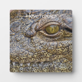 Nile crocodile from Africa Plaques