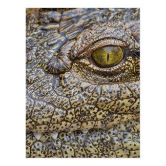 Nile crocodile from Africa Postcard