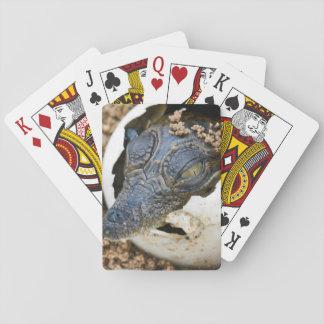 Nile Crocodile Hatchling Emerging From Egg Poker Cards