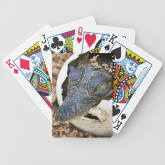 Nile Crocodile Hatchling Emerging From Egg Bicycle Card Deck