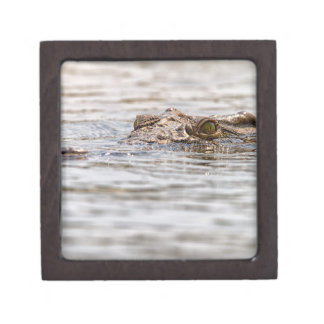 Nile Crocodile Jewelry Box