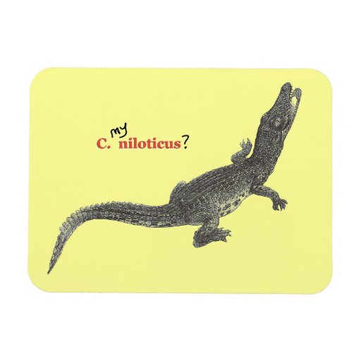 Nile Crocodile Youngster Rectangular Photo Magnet