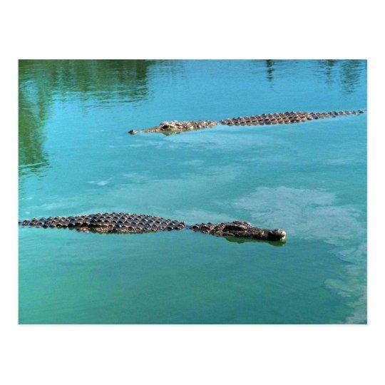 Nile Crocodiles Postcard