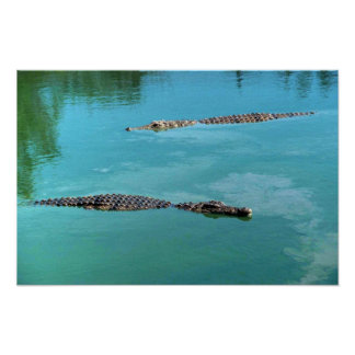 Nile Crocodiles Print