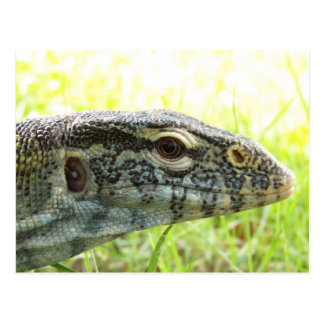 Nile Monitor Postcard