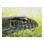Nile Monitor Posters