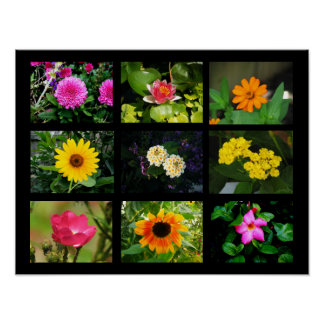 Nine Different Flowers 2 Poster