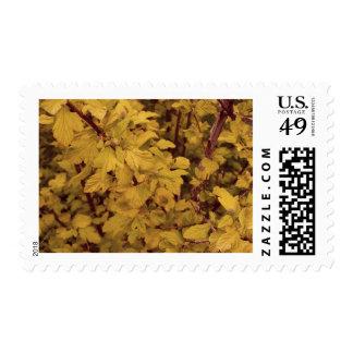 Ninebark Postage