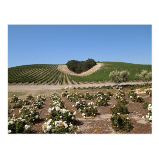 Niner Estates Heart Hill and White Roses Postcard