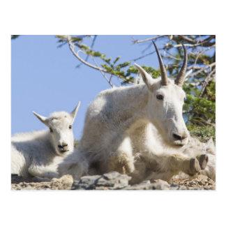 Niñera de la cabra de montaña con el niño en tarjeta postal