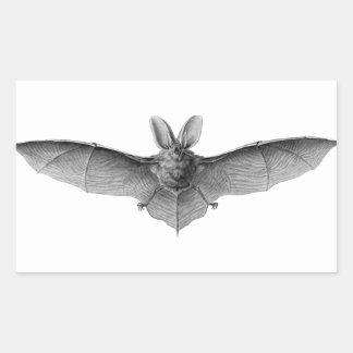 Nineteenth century bat pencil drawing by Haeckel Rectangular Sticker