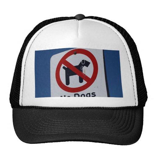 Ningunos perros permitidos gorros