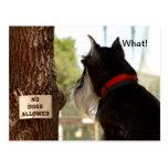 Ningunos perros permitidos tarjetas postales