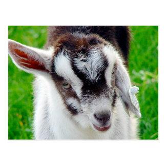 Niño bonito de la cabra tarjetas postales