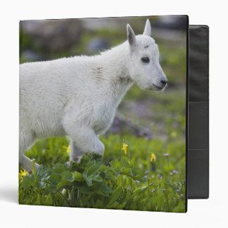 """Niño de la cabra de montaña en el paso de Logan en Carpeta 1 1/2"""""""