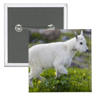 Niño de la cabra de montaña en el paso de Logan en Pins