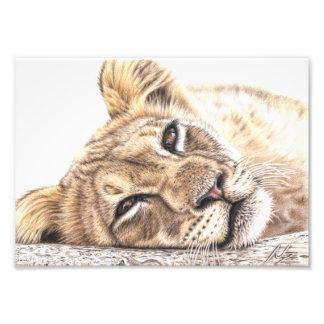 Niño de león - Tired Young Lion Arte Fotografico