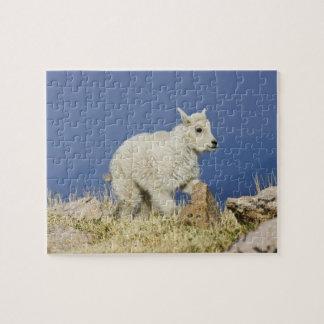 Niño o bebé de la cabra de montaña (Oreamnos ameri Rompecabeza