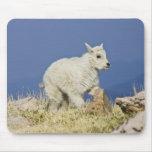 Niño o bebé de la cabra de montaña (Oreamnos ameri Tapete De Ratones