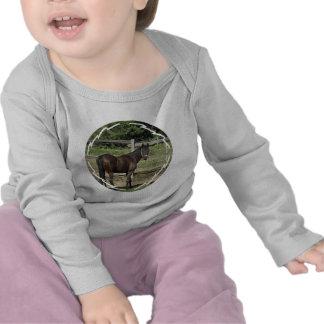 Niño oscuro del pura sangre de la bahía camisetas