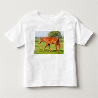 Niños hermosos del caballo, niños camiseta, idea playera de bebé