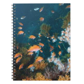 Nishiizumachi, Shizuoka Prefecture, Japan 2 Spiral Notebook