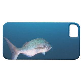 Nishiizumachi, Shizuoka Prefecture, Japan iPhone SE/5/5s Case