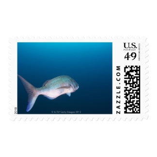 Nishiizumachi, Shizuoka Prefecture, Japan Postage Stamp