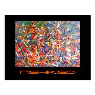 Nishikigoi Post Cards
