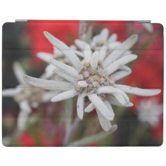 Nivale precioso del Leontopodium de Edelweiss Cover De iPad