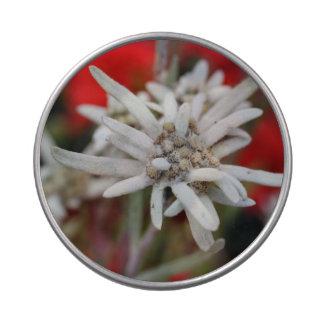 Nivale precioso del Leontopodium de Edelweiss Frascos De Dulces