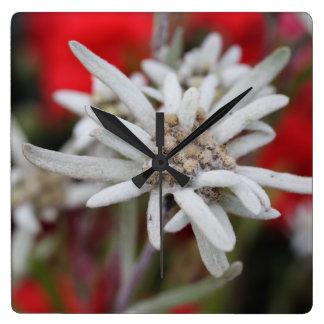 Nivale precioso del Leontopodium de Edelweiss Reloj