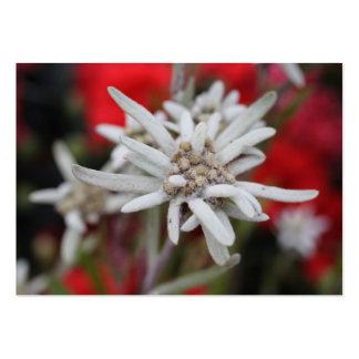 Nivale precioso del Leontopodium de Edelweiss Plantillas De Tarjetas Personales